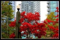 Vancouver en octobre