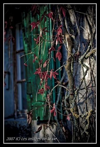 automne autumn