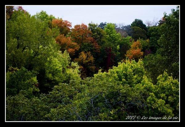 L'automne à Momtréal
