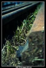 Rail abandonné