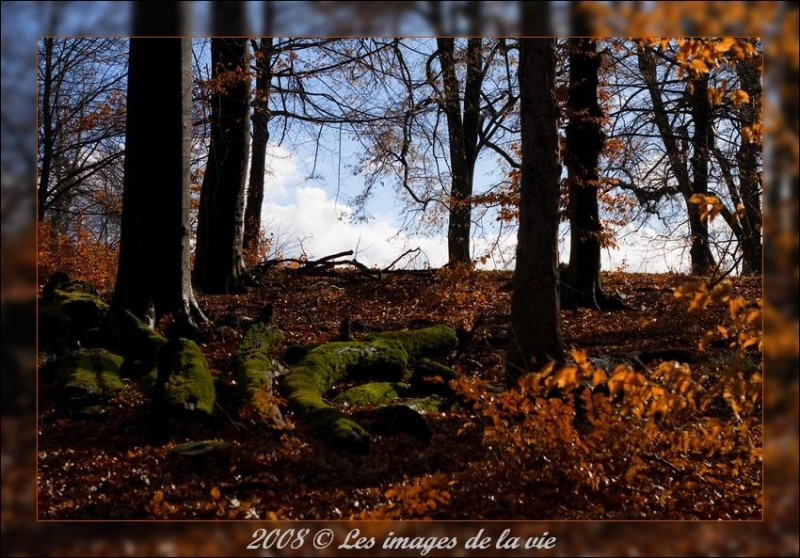 Foret, arbre, bois,ombre-Forest, trees, wood, shad