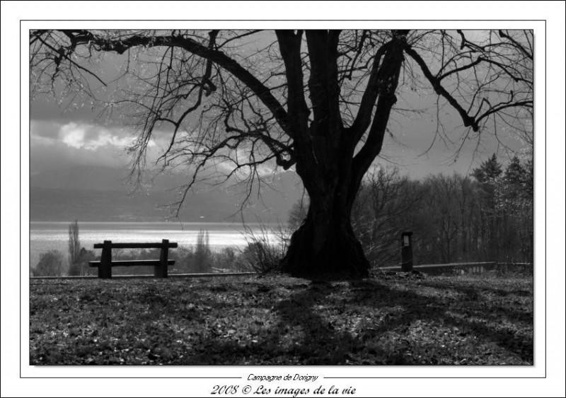 Paysage suisse lac léman
