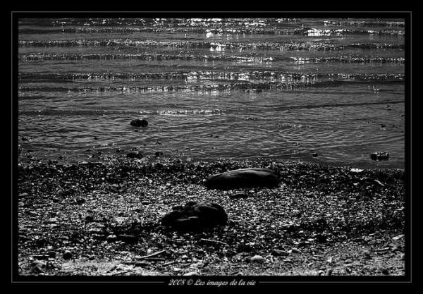 Cailloux du bord du lac Lémann