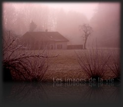 Brouillard sur savigny