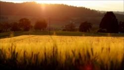 Other sunset over- coucher de soleil sur un champ