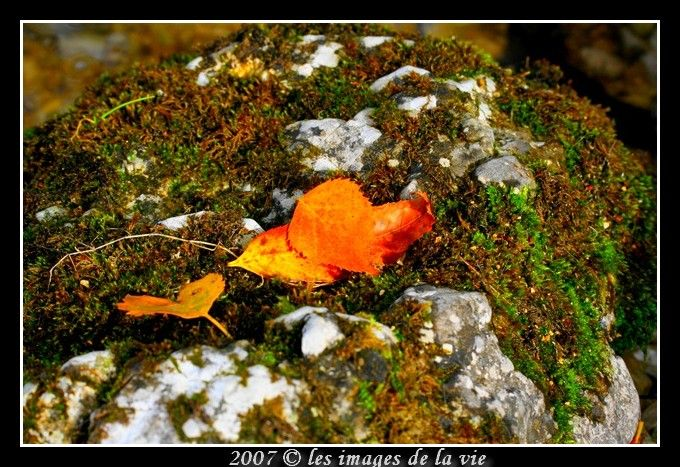 automne-Fall