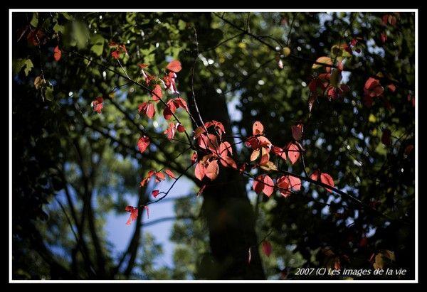 couleurs d'automne-Autumn colors
