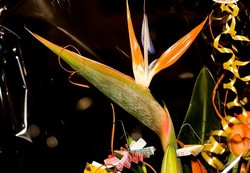 called the bird of paradise