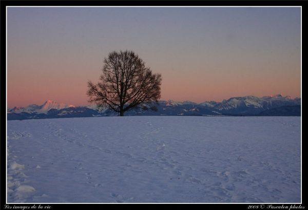 Un arbre bien seul