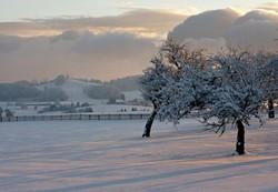 Neige,Snow,arbre