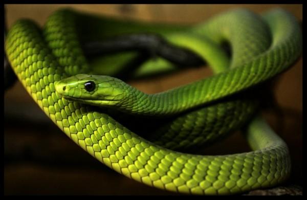 Pequeña Serpiente