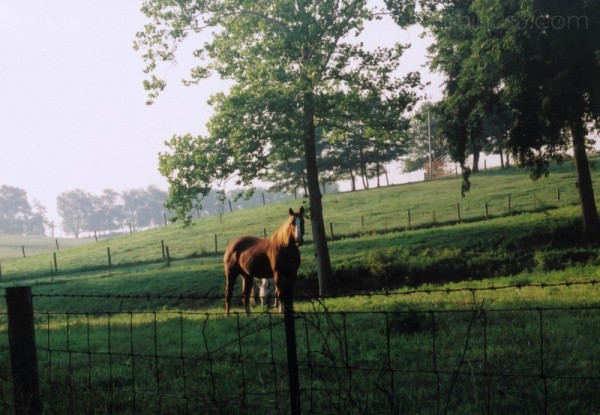 horse in field at morning time