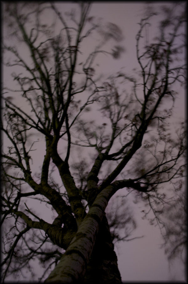 Image og a tree, taken sith long exposure - 15 sec