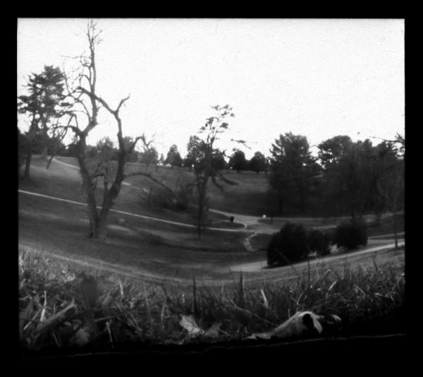 a b&w pinhole image of trees.