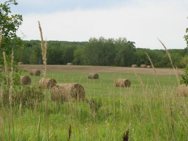 Hay bales in rural Minnesota