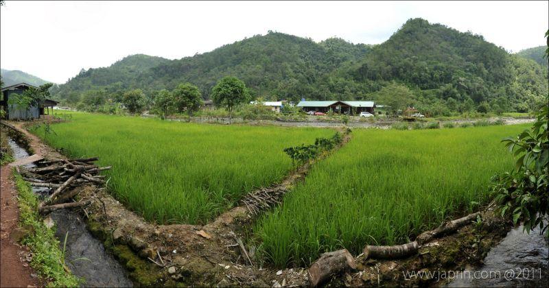 Greenish at Kg. Tambatuon, Kota Belud, Sabah