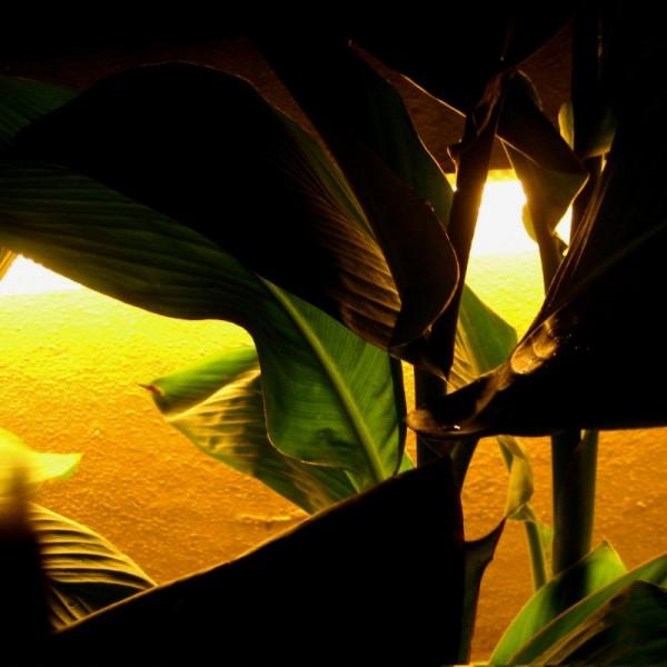 Night Foliage