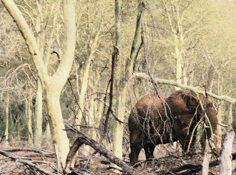 Elephant in Green Forest