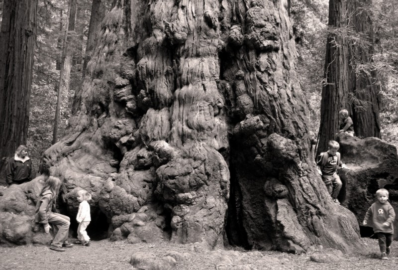 Tree Trunk Kids