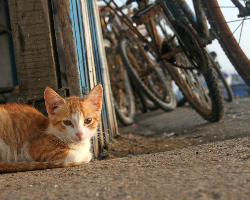 A Cat in Essaouira, Morocco