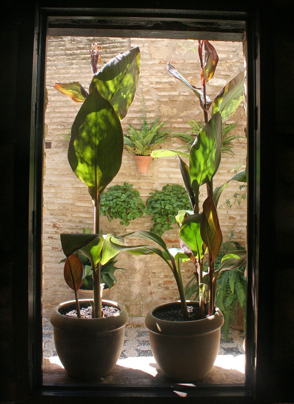 Plants in Cordoba Synagogue (Spain)