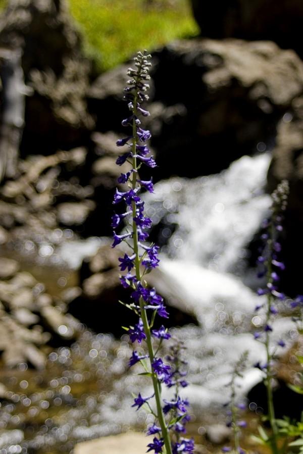 Near Sardine Falls