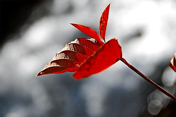 red leaf against water