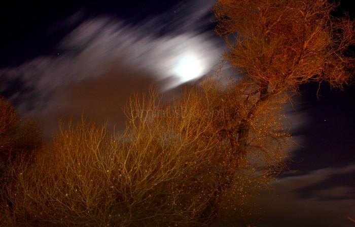 Hibernal Midnight