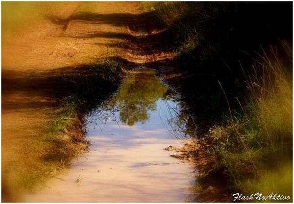 Charco-Puddle-Une flaque d'eau