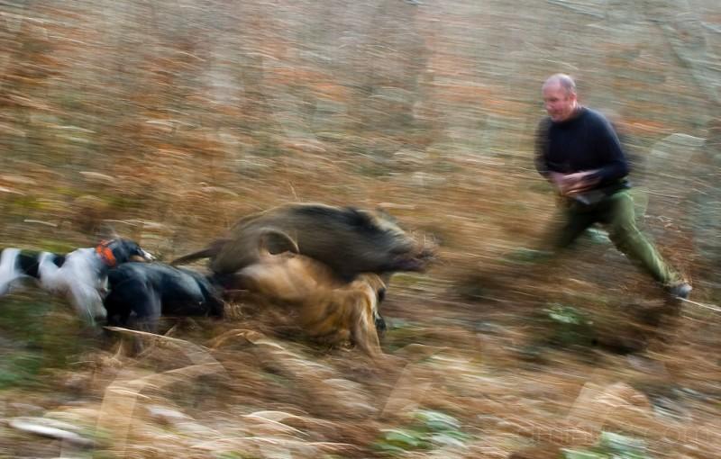 wild boar hunter with knife
