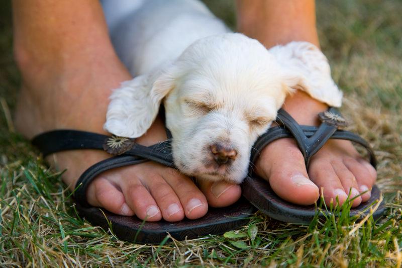 puppy // cachorro