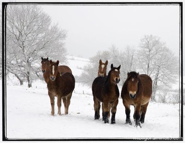 frio  invierno  //  cold winter