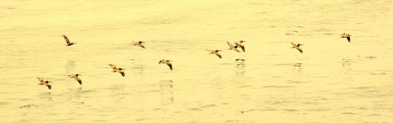 Yellow Flight