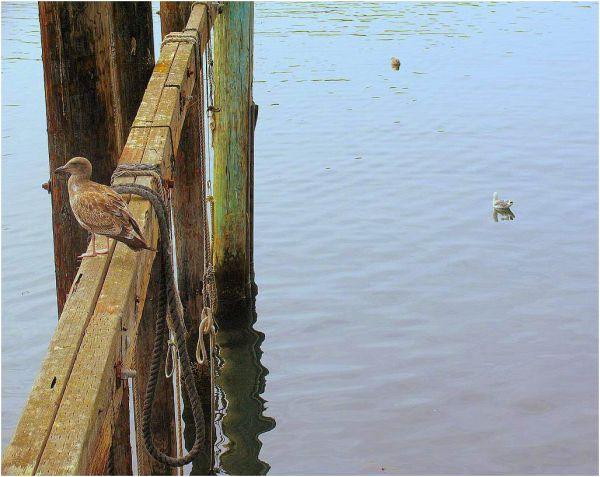Monterey Wharf
