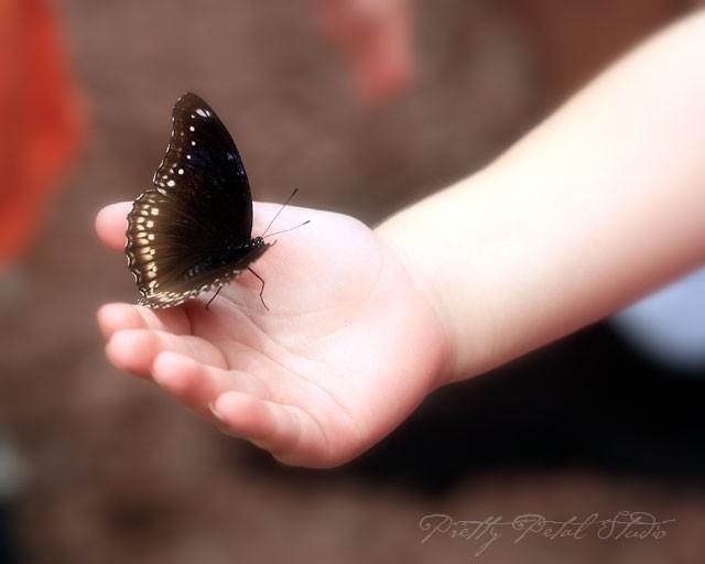 black butterfly in little girl's hand