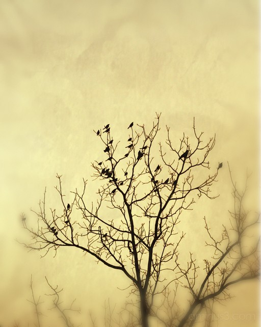 Silhouette of tree with birds