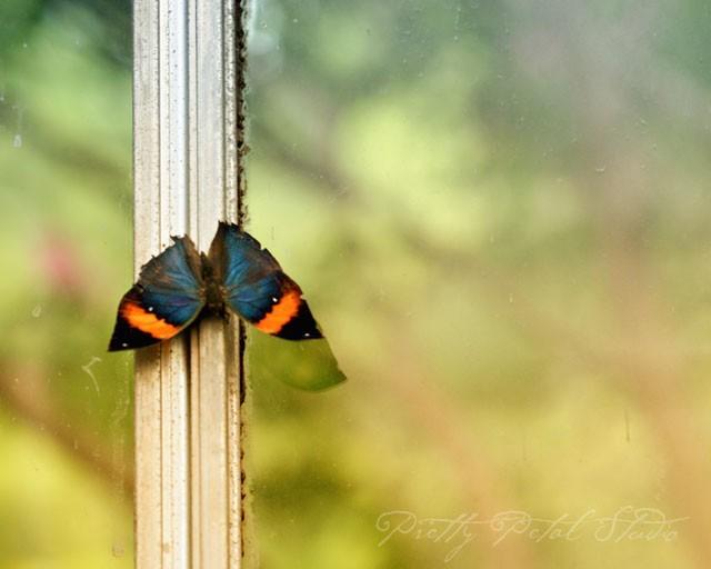 Butterfly on white window pane