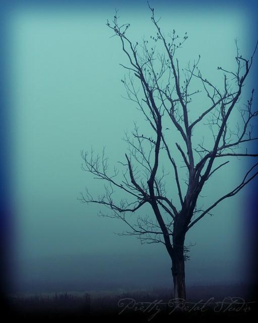 Dead tree with birds in fog