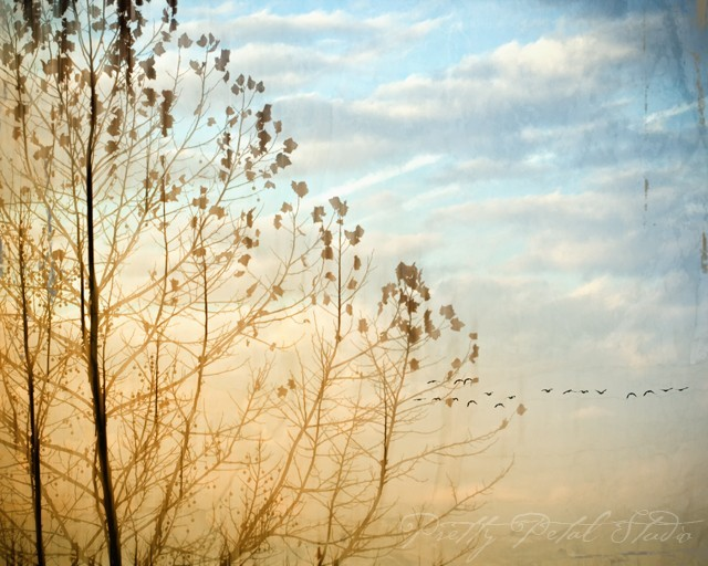 Birds flying beyond a tree