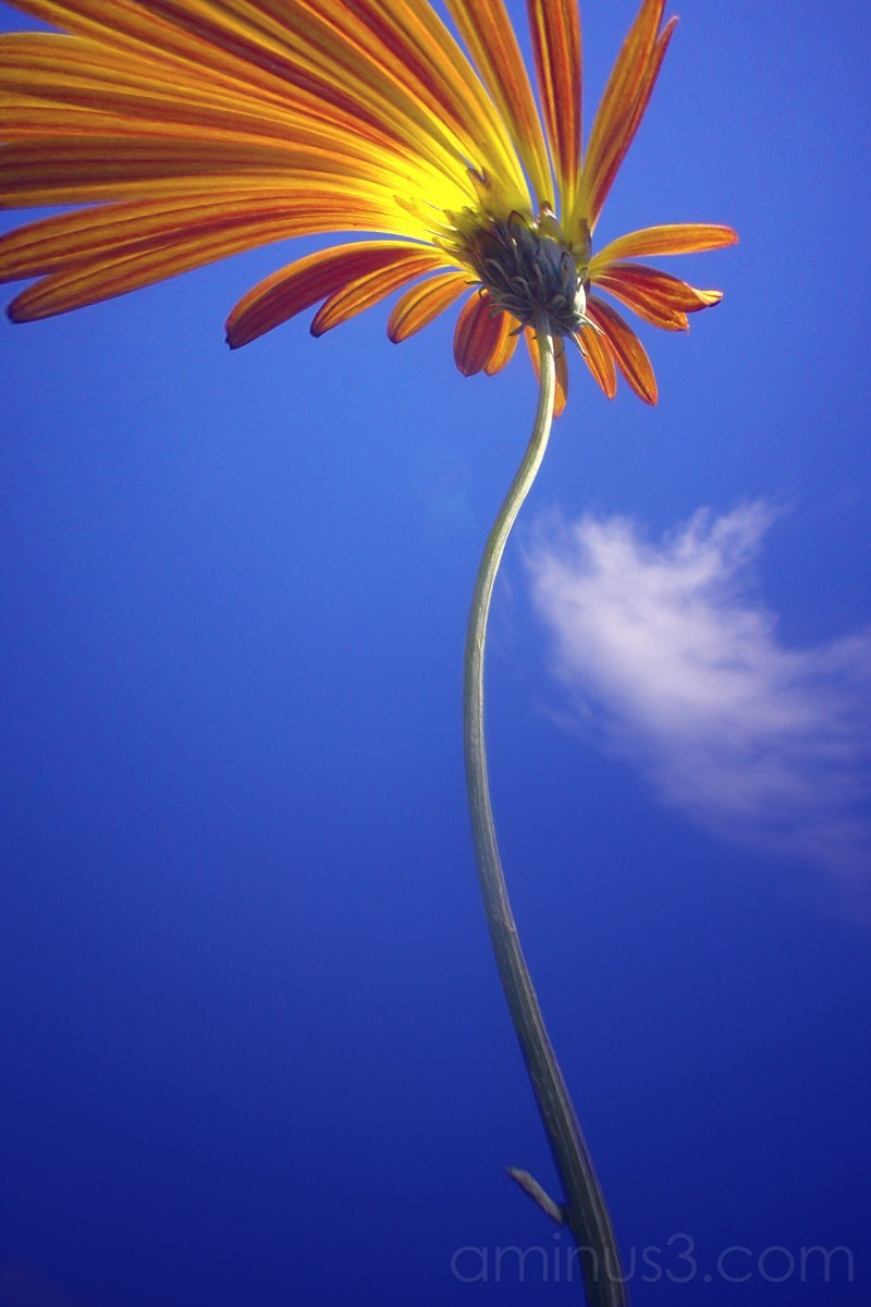 Reaching for the sky