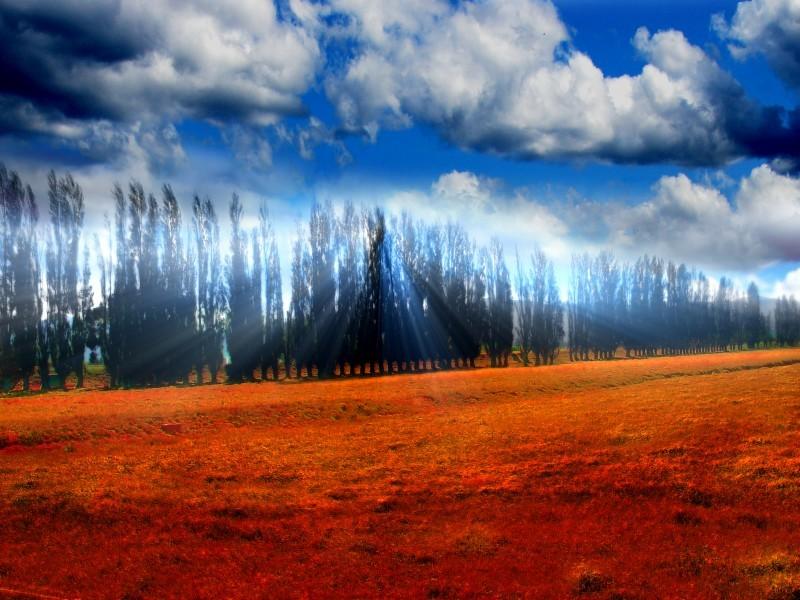 A Poplar Place