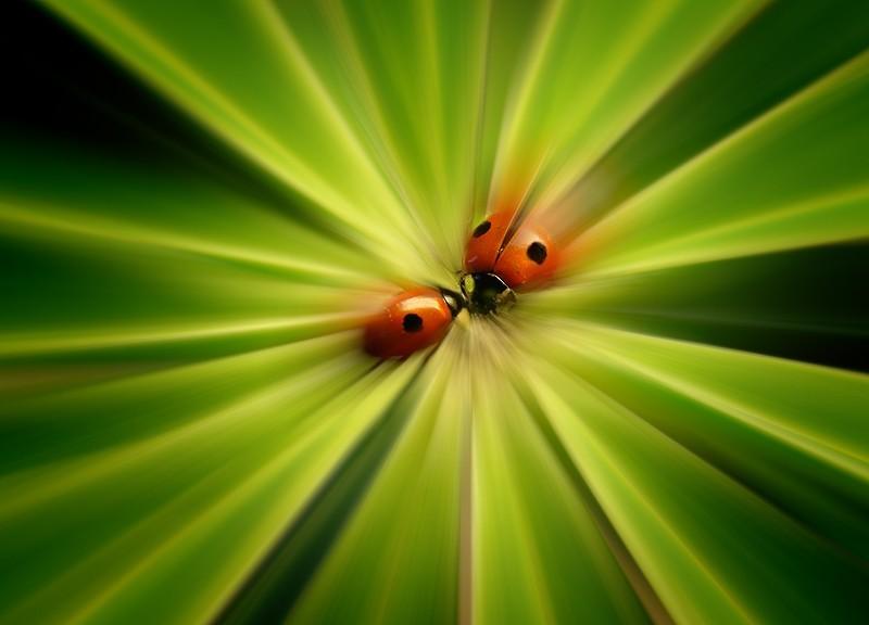 Ladybird kisses