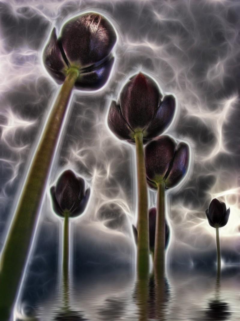 Turbulent Tulips