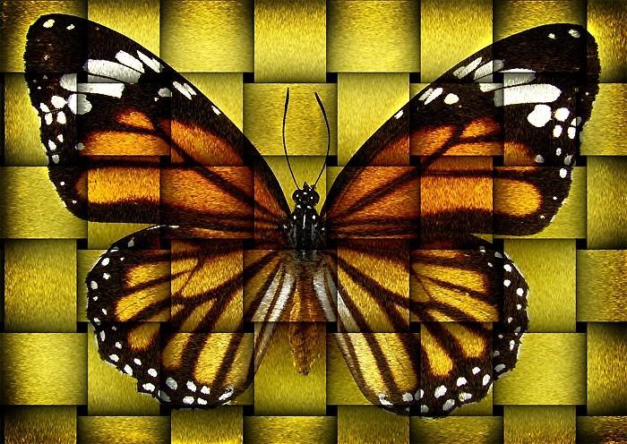 Woven Monarch