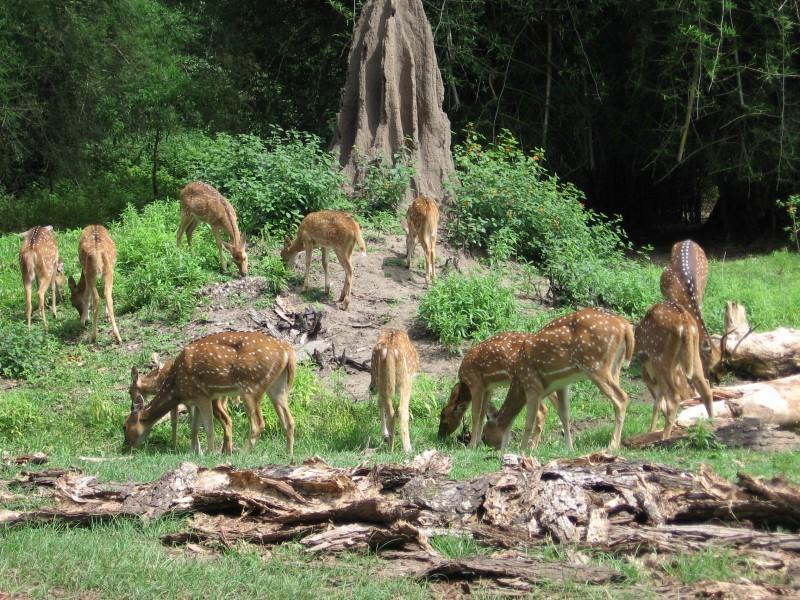 Wildlife from Bandipur Sanctuary