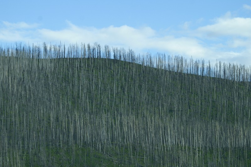 1988 yellowstone forest fire