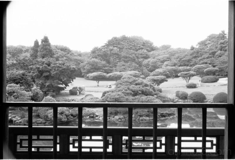 garden japan tokyo shinjuku gyoen 東京 日本 新宿 新宿御 庭