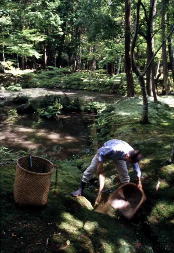 moss kyoto 苔 京都 寺 大原 temple ohara