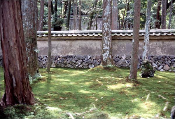 moss kyoto 苔 京都 寺 大原 嵐山 木 trees