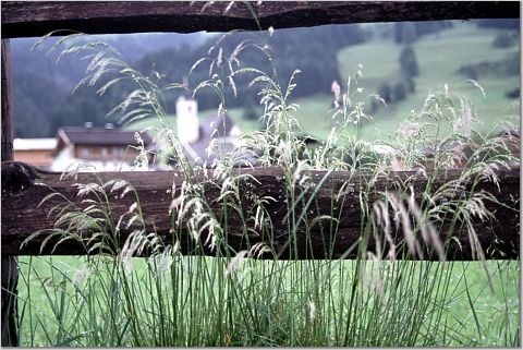 mountains grass fence switzerland